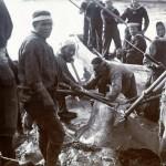 Walfischbeute, Korsakowsk - Sachalin