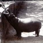 Nielpferd-fütterung, Bombay