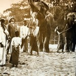 Gezähmte Elefanten, Ceylon