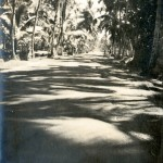 Landstrasse auf Ceylon