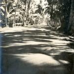 Landstrasse auf Ceylon